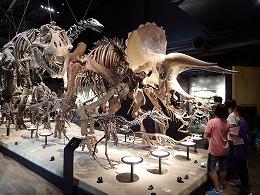 御船町恐竜博物館を見学する受講生